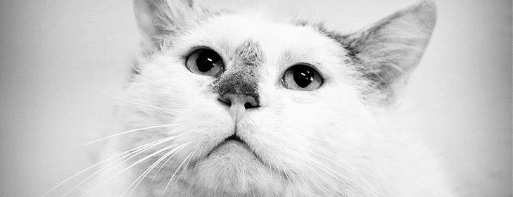 velké mokré kočička fotky lesbické prsty kočička